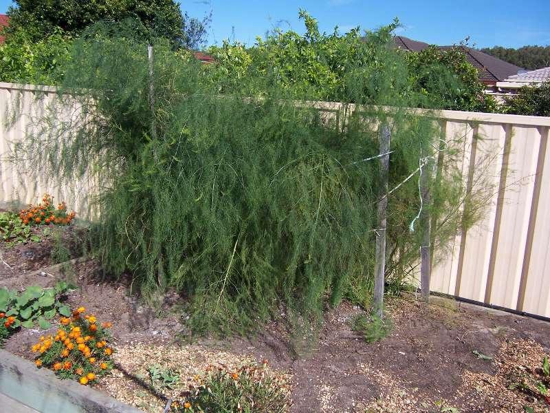 In John\'s Garden | Sustainable Gardeners